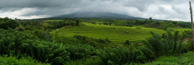 Moody rice terrace panorama. Flores