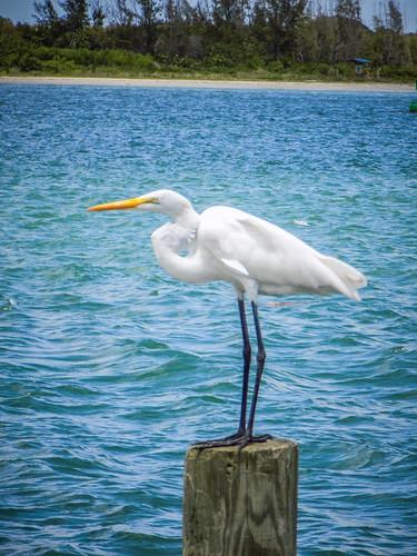 Egret-002