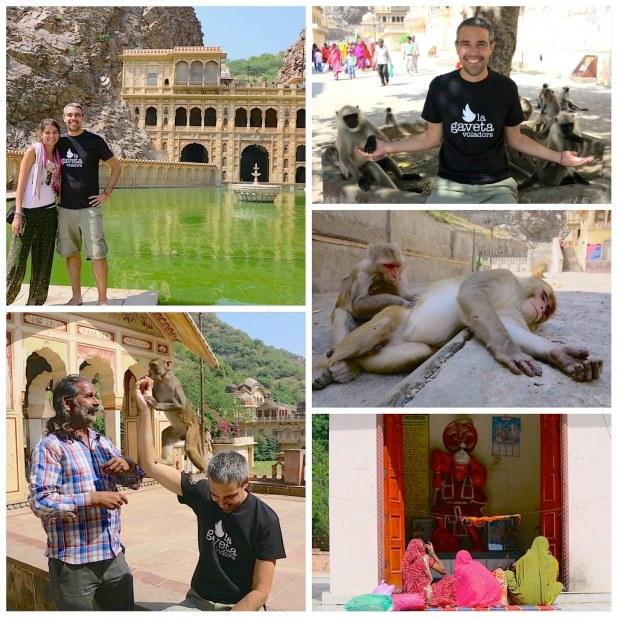 Templos de Jaipur, Templo de los Monos