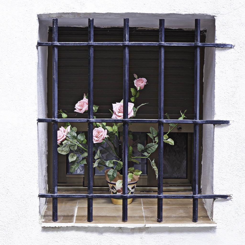 Imagen gratis de rosas en una ventana con reja