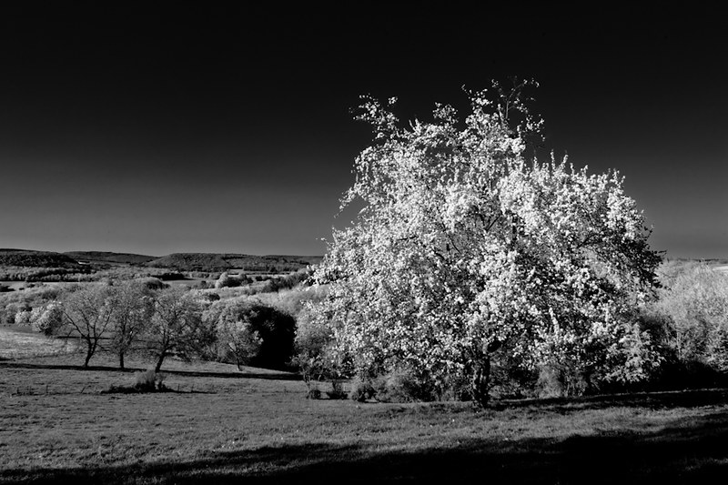 Day 116 _ Infrared