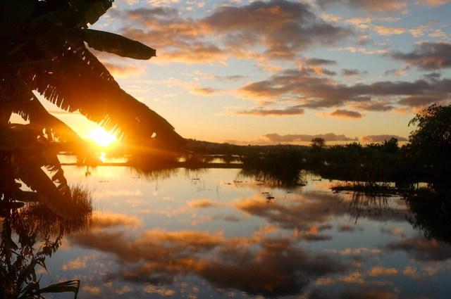 Rice Paddy Sunset