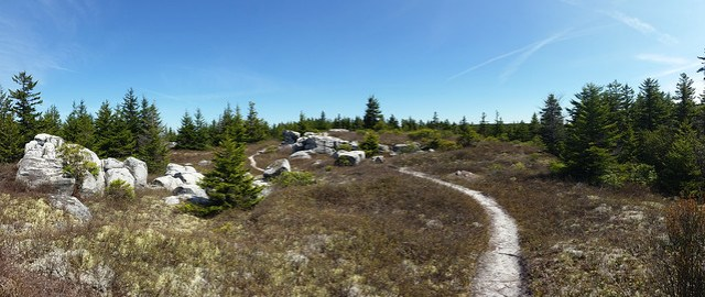 20160508_Dolly Sods_016