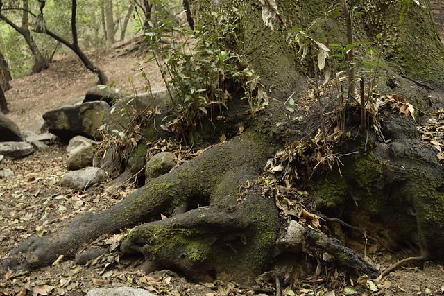 trunk_sprucegrove
