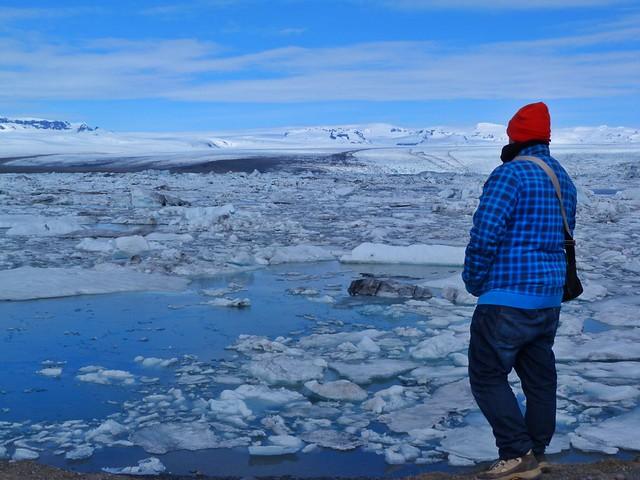 Sele en la laguna Jokulsarlon (Islandia)