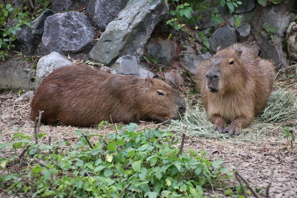 九州自然動物公園アフリカンサファリ_20140923