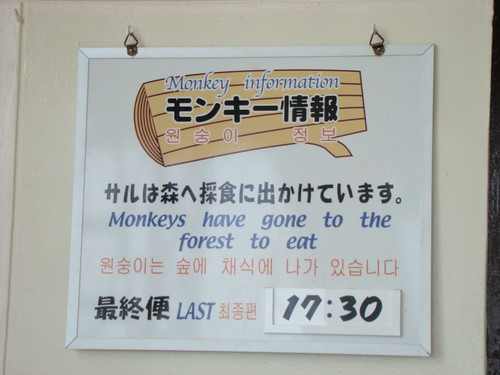 Monkeys Have Gone to the Forest to Eat