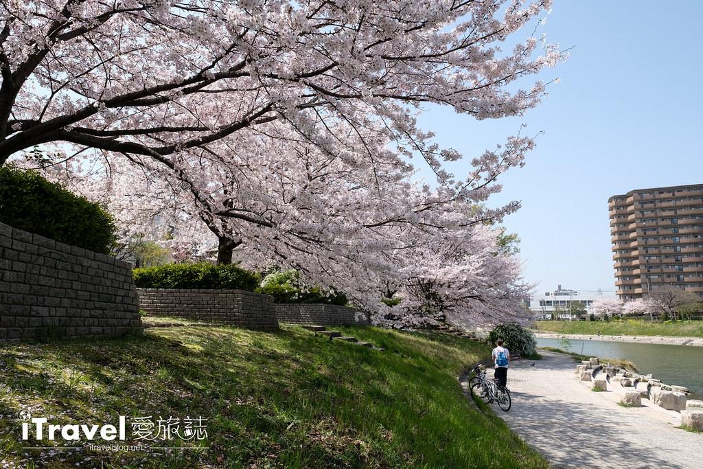 福岡賞櫻景點 美野島南公園 (32)