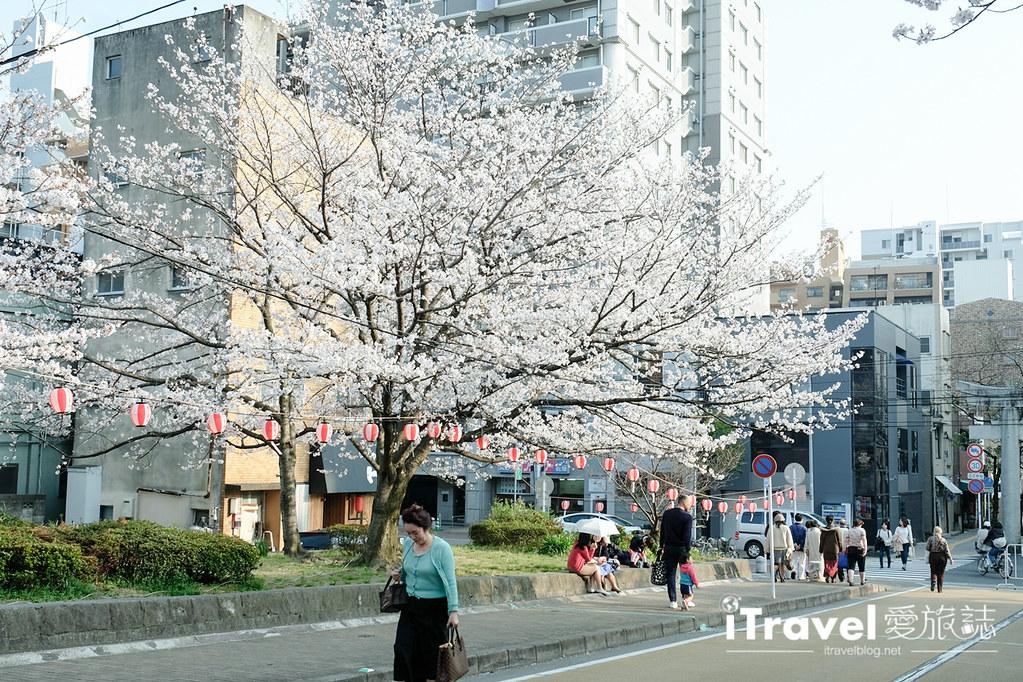 福岡賞櫻景點 西公園Nishi Park (12)
