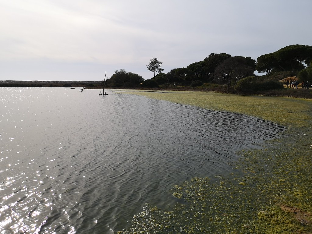 laguna Parque Natural de la Ria Formosa Algarve Portugal 03