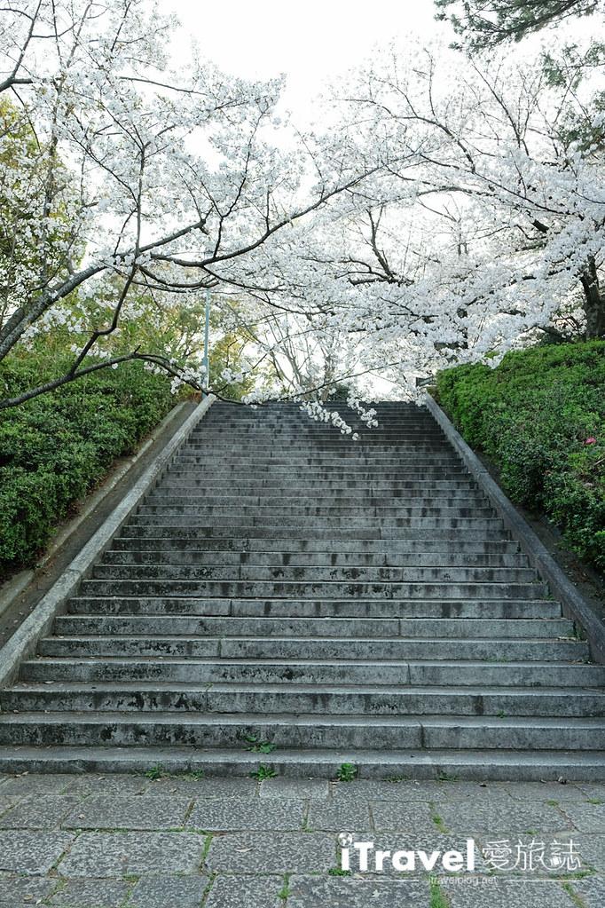 福岡賞櫻景點 西公園Nishi Park (50)