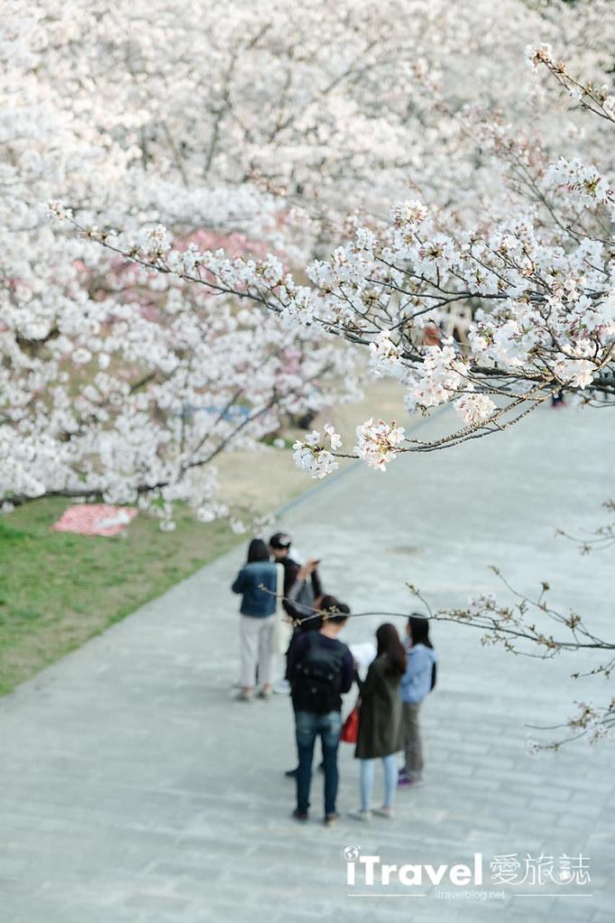 福岡賞櫻景點 西公園Nishi Park (35)
