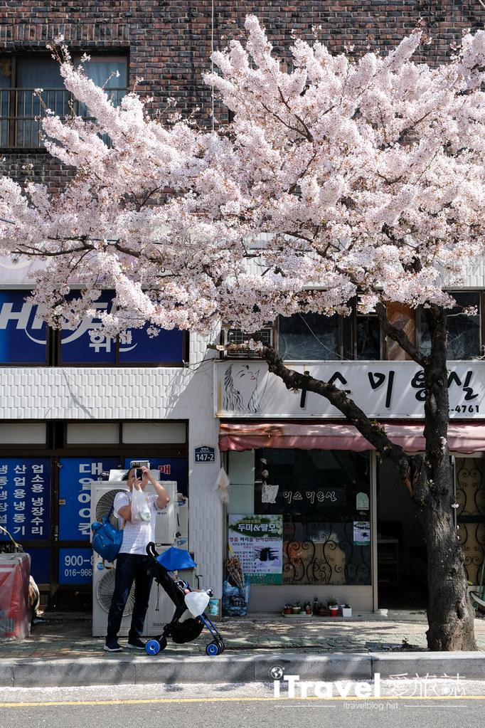 釜山賞櫻景點 東大新洞望洋路 (16)