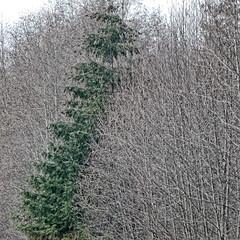 Vertical tree line