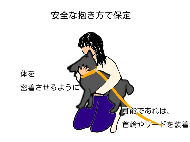 怪我をした犬を安全に保定する方法