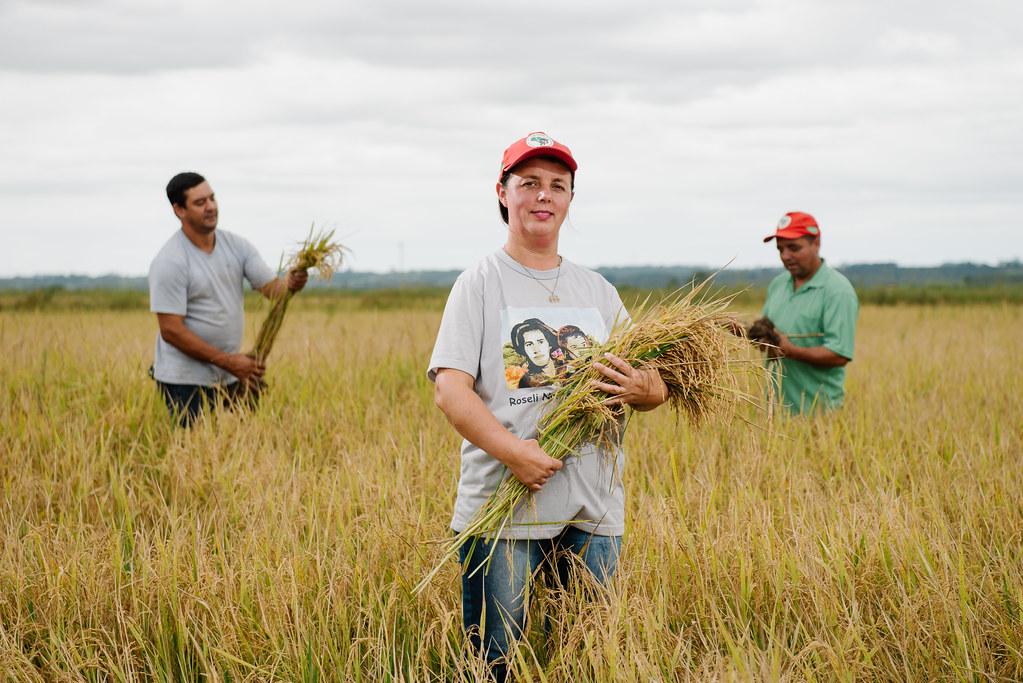 Produção de arroz orgânico envolve hoje 363 famílias assentadas. Foto Alex Garcia.jpg