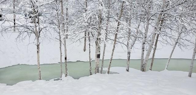 2019-01-29_Fairbanks_017