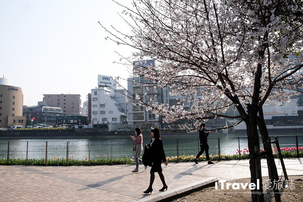 福岡賞櫻景點 博多清流公園 (10)