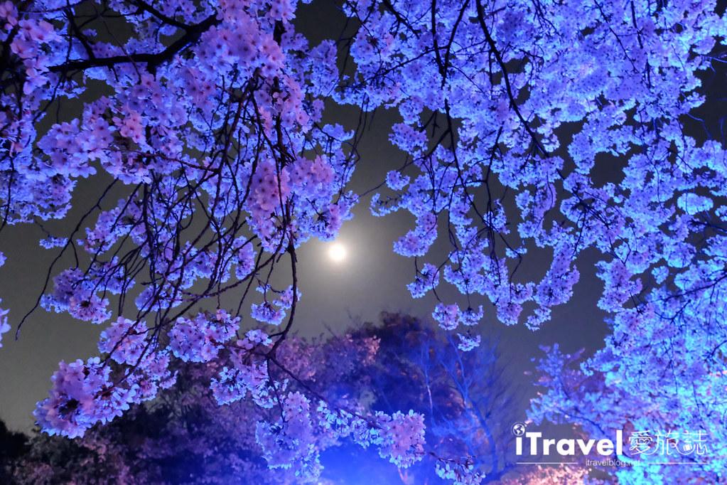 賞櫻景點 福岡城夜櫻 (74)