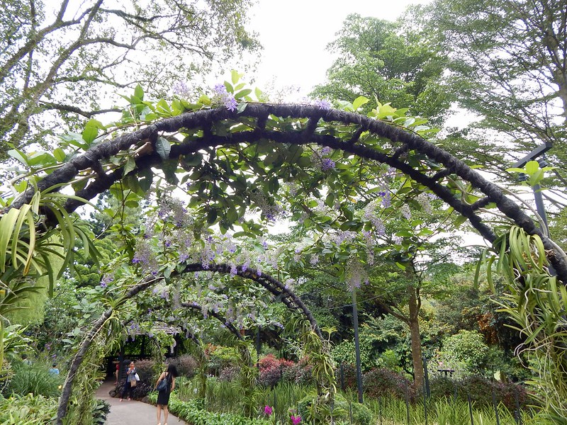 City Girl City Stories: National Orchid Garden