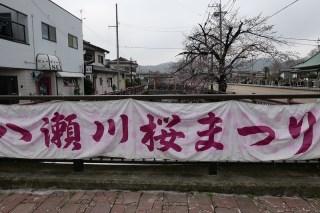 Yasegawa Cherry Blossoms群馬県太田市「八瀬川桜まつり」
