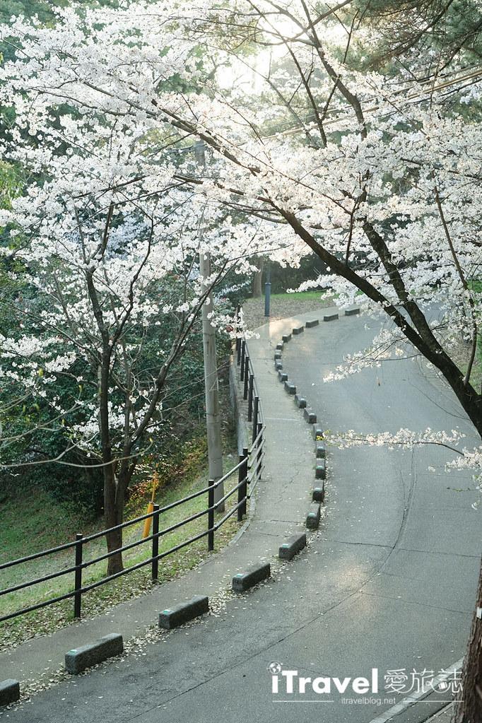 福岡賞櫻景點 西公園Nishi Park (48)