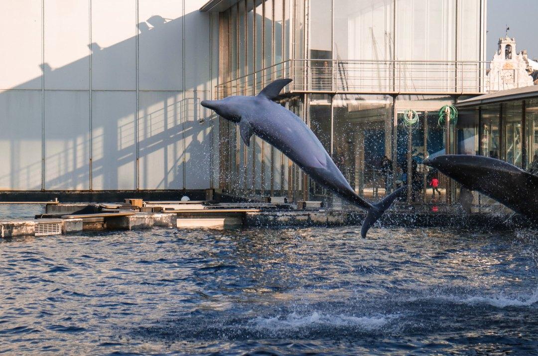 Vasca dei delfini, Acquario di Genova