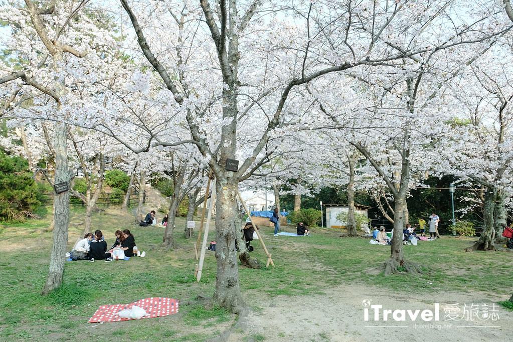 福岡賞櫻景點 西公園Nishi Park (31)
