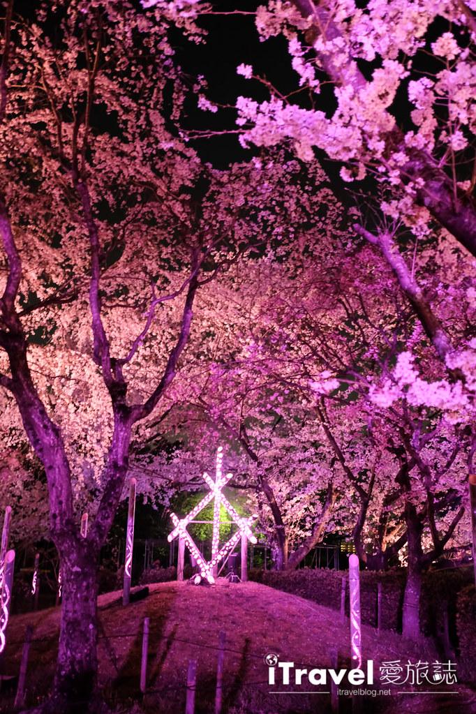 賞櫻景點 福岡城夜櫻 (60)