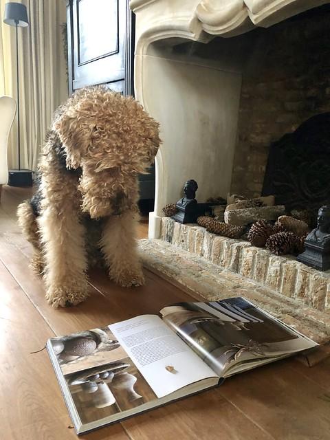 Bruine Airedale terriër leest interieur boek