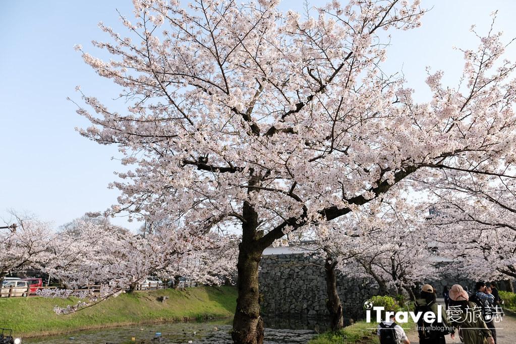 福岡賞櫻景點 福岡城 (7)