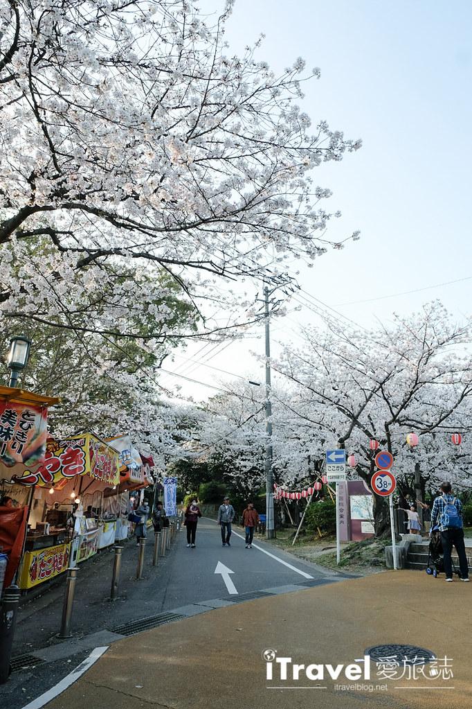 福岡賞櫻景點 西公園Nishi Park (28)