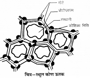RBSE Solutions for Class 9 Science Chapter 6 Structure of living 18
