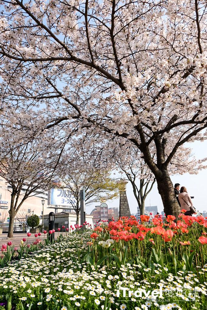 福岡賞櫻景點 博多清流公園 (32)