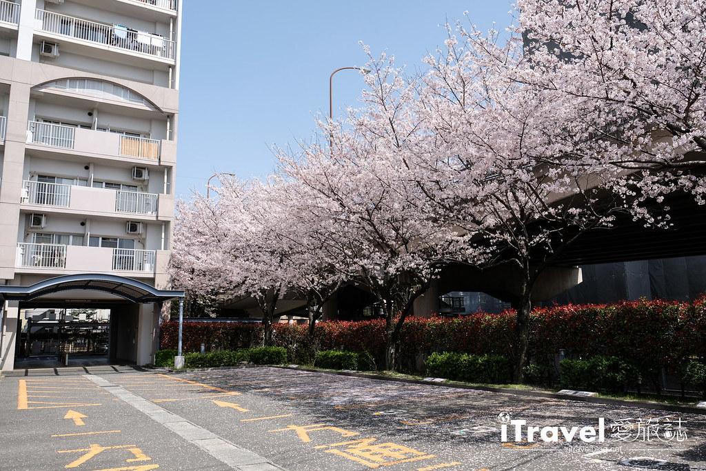 福岡賞櫻景點 美野島南公園 (5)
