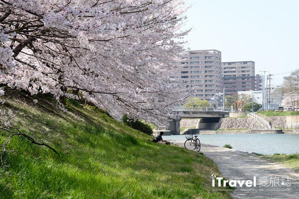 福岡賞櫻景點 美野島南公園 (45)