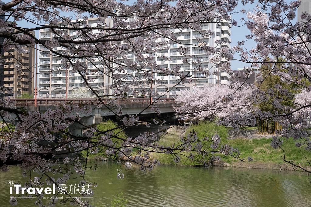 福岡賞櫻景點 美野島南公園 (24)