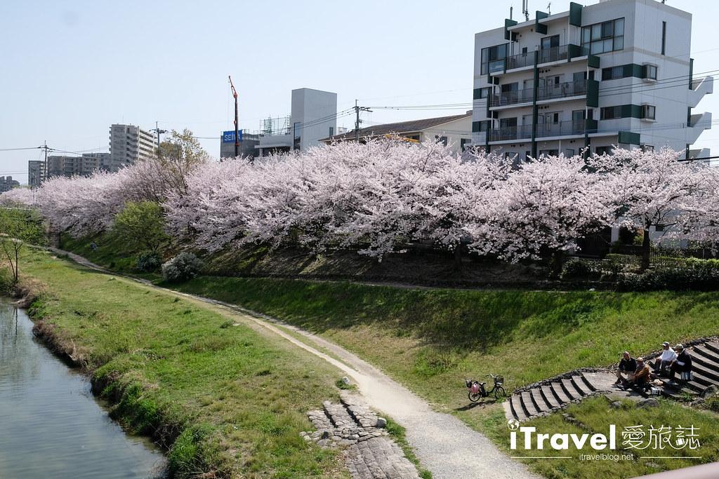 福岡賞櫻景點 美野島南公園 (28)