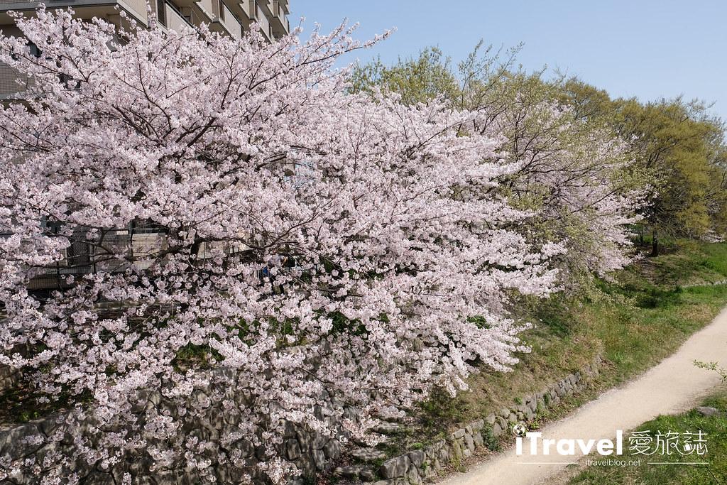 福岡賞櫻景點 美野島南公園 (13)