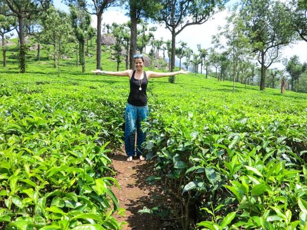 Plantaciones de té de Munnar
