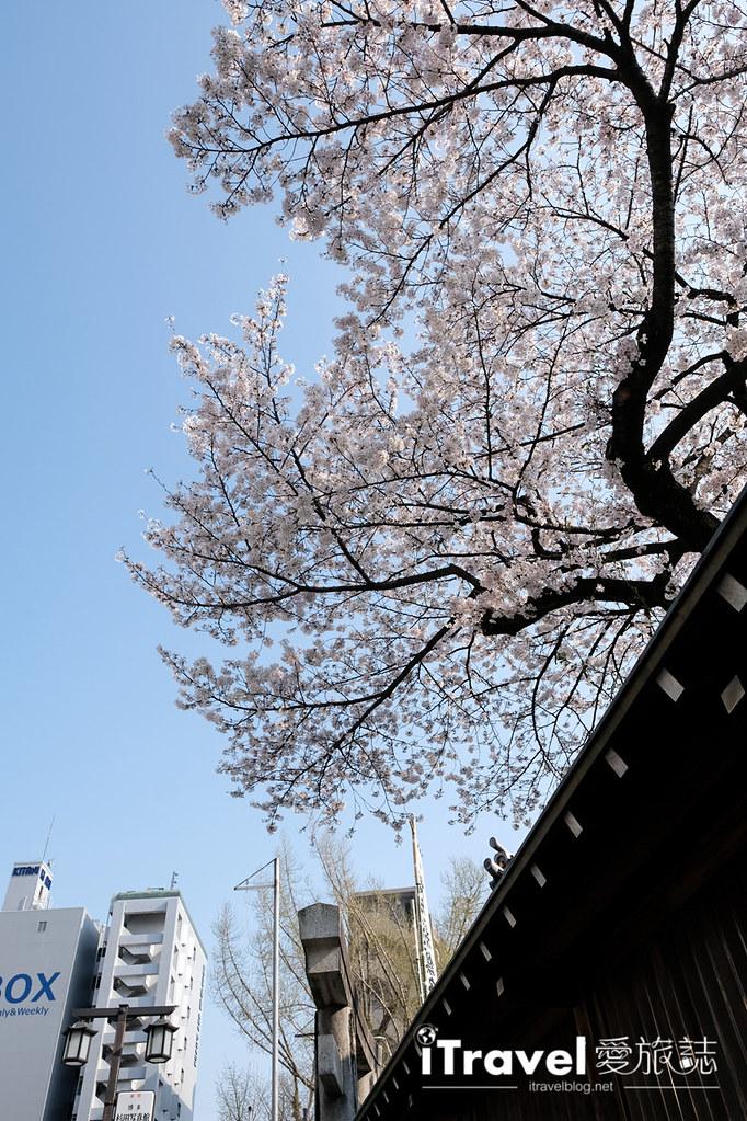 福岡賞櫻景點 櫛田神社 (39)