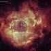 The Rosette Nebula - Caldwell49 (Ha:sG:OIII) Narrowband