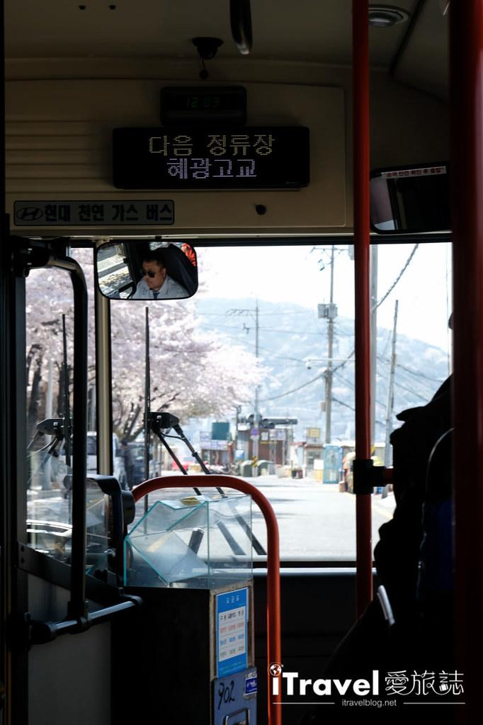 釜山賞櫻景點 東大新洞望洋路 (47)