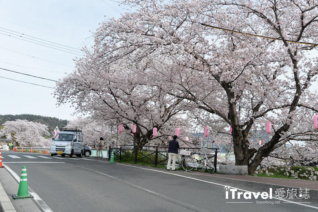 京都賞櫻景點 井手町玉川堤 (47)