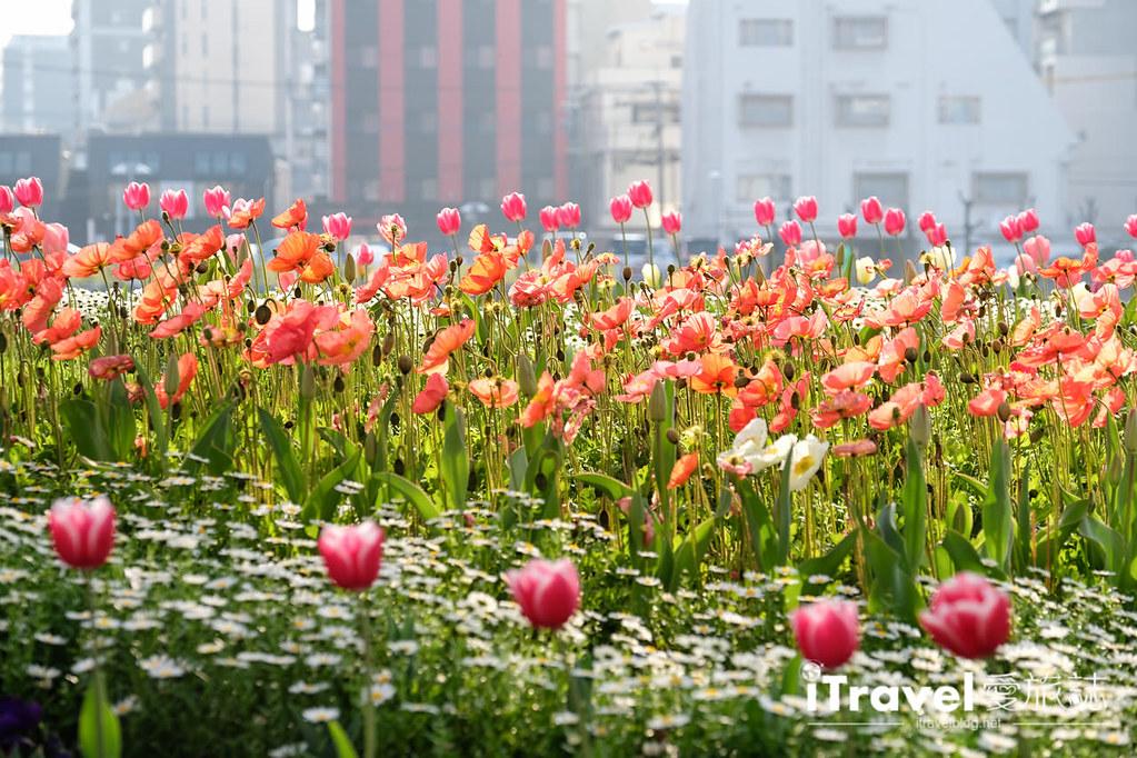 福岡賞櫻景點 博多清流公園 (31)