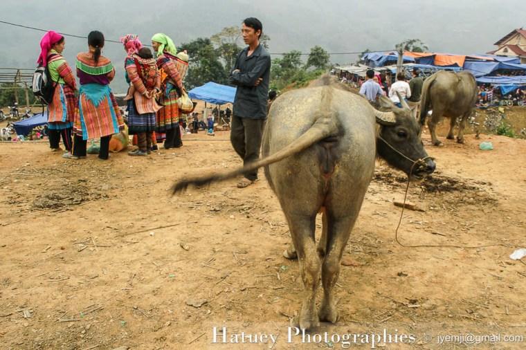 Vietnam - Marché de Cocly 0299
