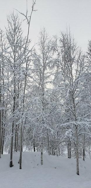 2019-01-29_Fairbanks_027