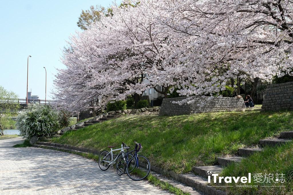 福岡賞櫻景點 美野島南公園 (36)