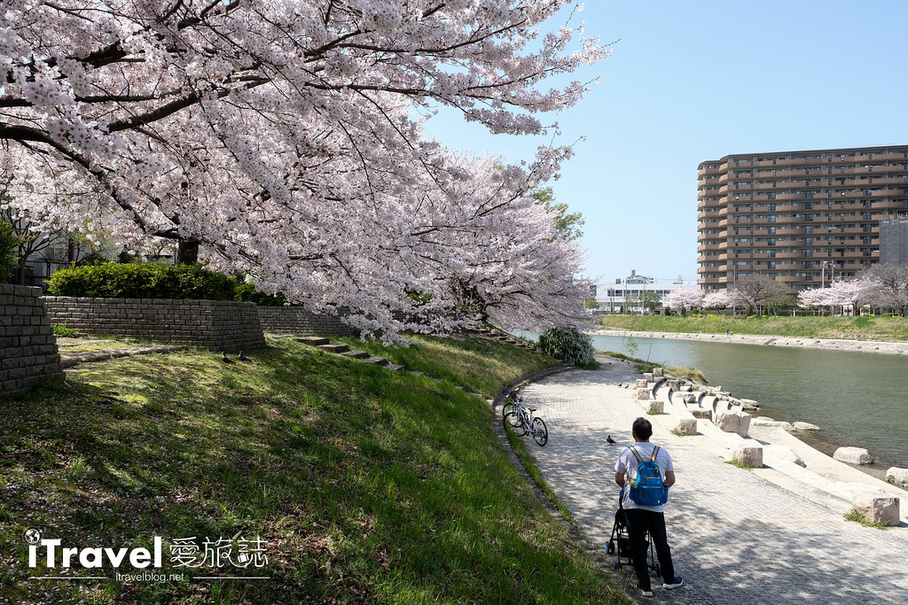 福岡賞櫻景點 美野島南公園 (31)