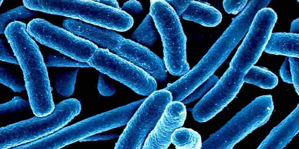 fontaine-de-jouvance-intestin-bactéries